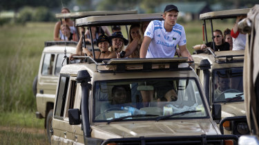 Tourists drive in safari vehicles to get a view of a female lion in Mikumi National Park, Tanzania.