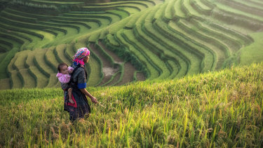 A Hmong mother carries her child while working at rice terraces in Mu Cang Chai.