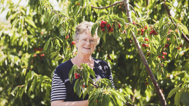 Young Cherry farmer Joanne Wells.