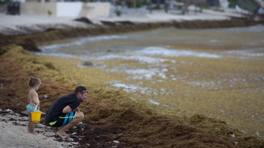 Tourists check out the sargassum in Bahia La Media Luna.