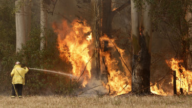 A fire crew member battles a blaze at Hillville, south of Taree, where schools will remain closed on Wednesday.