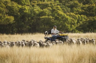 Yass Valley, NSW, farmer John Ive's strategic grazing practices, which match paddock size and sheep grazing rates with the changing landscape and its livestock carrying capacity, are boosting soil health and carbon content.