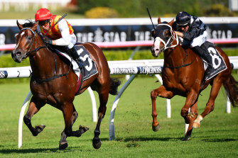 Overlord chases hard behind Peltzer at Randwick two weeks ago.