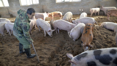 China, the world's largest producer of pork, is battling an African swine fever outbreak that could potentially devastate herds.