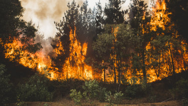 The bushfire at Pierces Creek.
