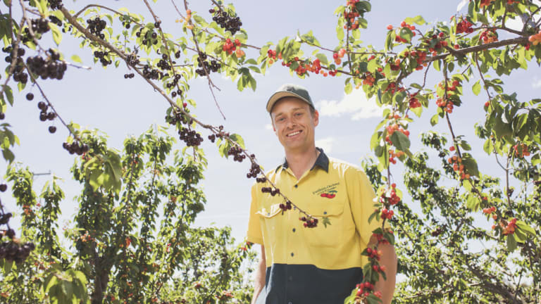 Cherry Growers Australia president and owner of Fairfields Orchard Tom Eastlake.