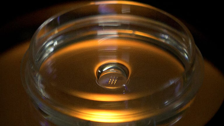 A microplate containing embryos that have been injected with Cas9 protein and PCSK9 sgRNA is seen in a laboratory in Shenzhen.
