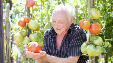 George Giannakakis with oxheart and Greek tomatoes.
