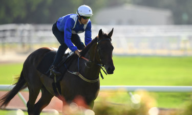 As good as ever: Winx comes back after her morning spin around Rosehill in a barrier trial on Tuesday.
