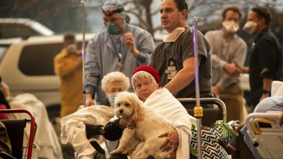 Surviving the fire was hard enough. Now pets must find their owners.
