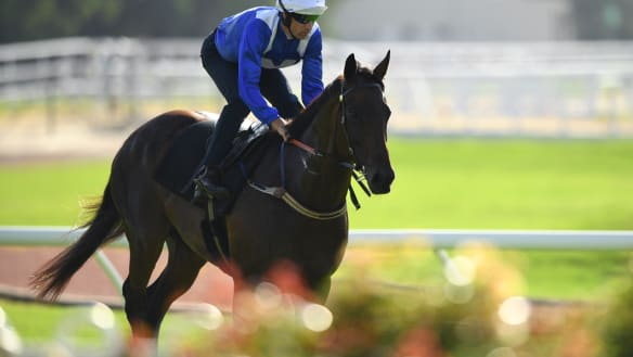 All signs are good as Winx gets back to business in barrier trial