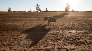 Parched land near Coonamble, in north-western NSW.