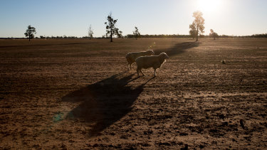 Drought-stricken countryside in western  NSW.