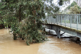 River levels rise in Traralgon on Saturday.