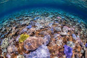 As the third mass coral bleaching event in five years unfolds on the Great Barrier Reef and in the Coral Sea, the government is planning to test different approaches to make corals more resilient.