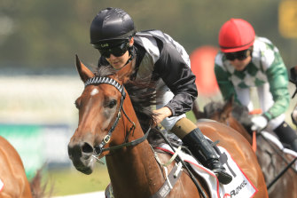 Invictus Salute will look to make it two wins in seven days over the Rosehill 1100m on Saturday.