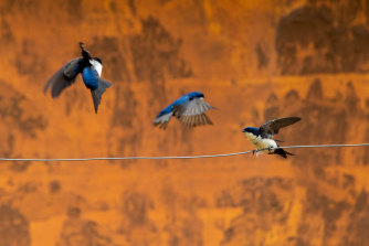 Swallows guard the entrance wall to a mud-enveloped childcare centre in Paracatu de Baixo, Minas Gerais, Brazil, three years after the Samarco dam burst.
