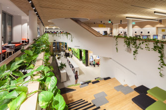 In Woollahra Library, diagonal bridges are flooded with light and hung with live jungle plants.