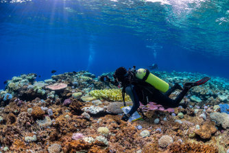 Researchers have just returned from the Coral Sea after finding coral bleaching on all 16 remote reefs they visited.