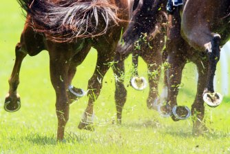 Racing returns to Scone on Friday with an eight-race card.