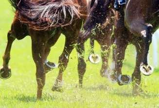 There are plenty of chances for punters to pick from at Newcastle on Tuesday.