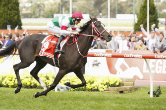 A nod is not quite as good as a Winx to a Japanese horse