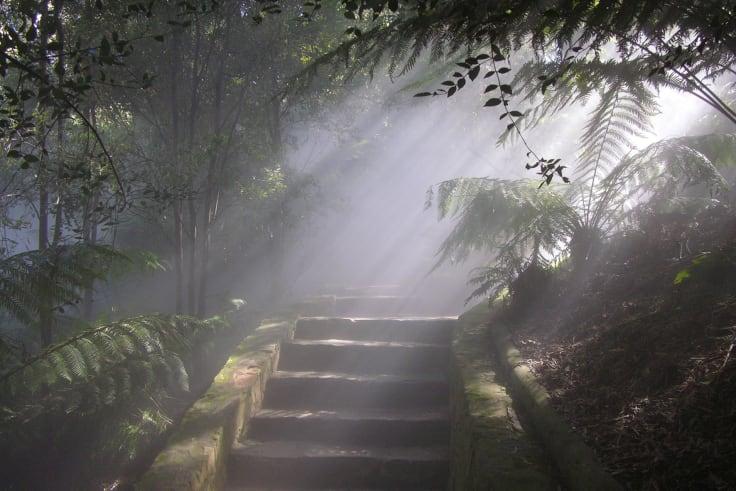 Sun highlights mist in the Rainforest Gully.
