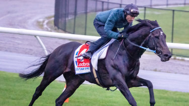 Gold Trip has not yet been passed fit to run in Saturday's Cox Plate.