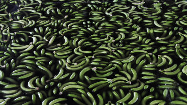 Chinese consumers are eating more bananas than ever before.