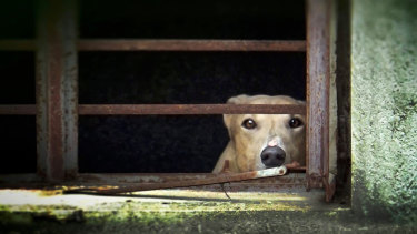 A dog in the Canidrome kennels.