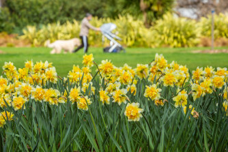 Melburnians walk past the daffodils at Fitzroy Gardens on Monday.