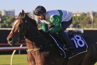 Entente is one of two Gai Waterhouse-Adrian Bott hopes in the Gosford Cup on Saturday.