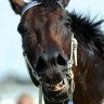 Faster than Black Caviar? It's time for a timing change