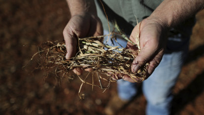 End of drought to help crop farmers but slash beef exports