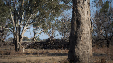 Nsw analysis shows the Commonwealth spent millions on carbon credits to stop land clearing of trees which were unlikely to be cut down.