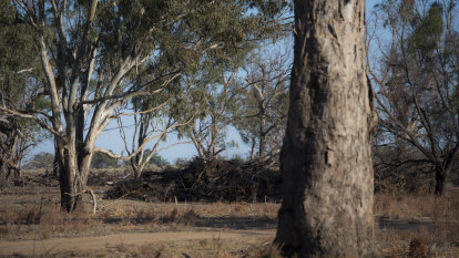 Analysis finds $300m paid to farmers to keep trees they were unlikely to clear