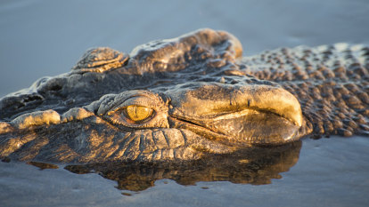 Second croc killed as investigation into missing fisherman continues