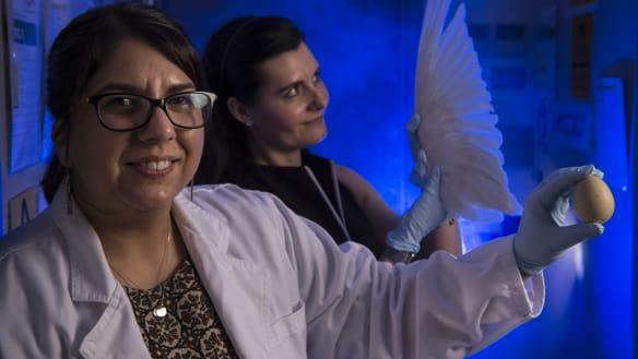 Animal CSI: In this Australian lab, scientists are solving animal crimes