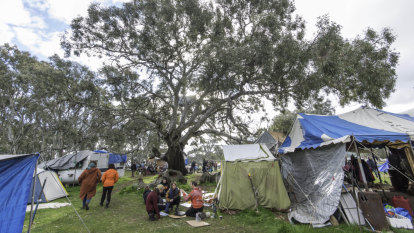Protester numbers surge at sacred tree site as eviction clash looms