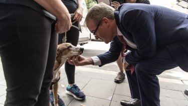 Labor leader Michael Daley meets Arwin the dog before touring Crown Street in Surry Hills.