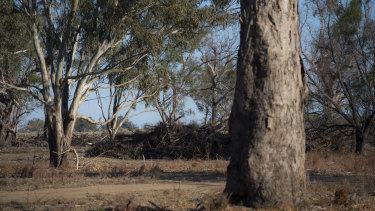 New analysis shows the Commonwealth spent millions on carbon credits to stop land clearing of trees which were unlikely to be cut down.