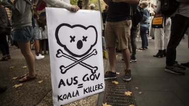 The loss of wildlife, especially Koala Bears, were the focal point for this protest sign.