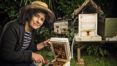 Allyson Apte, a beekeeper from Turramurra, has over 100,000 bees.
