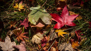 There are leaves to rake.