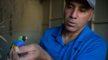 Bird keeper Gerry Portelli with one of his finches.