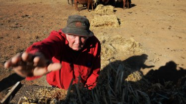 'You'll send yourself broke feeding cows': drought ravaged communities get budget boost