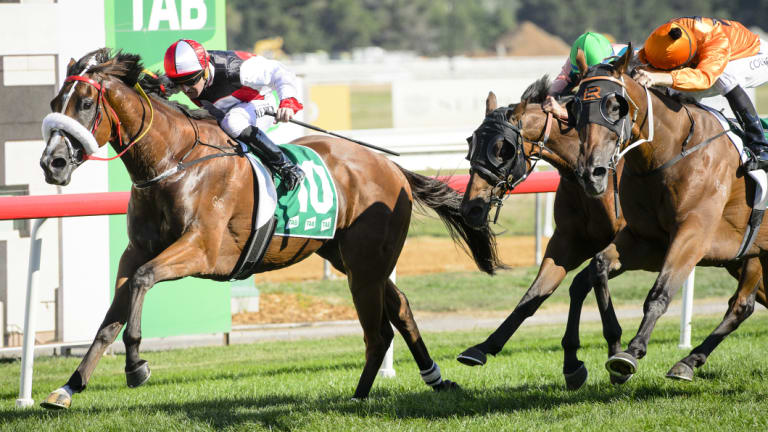 Almost Court, left, wins the Canberra Cup earlier this year.