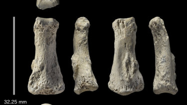 Six angles of a Homo sapiens fossil finger bone from the Al Wusta archaeological site in Saudi Arabia