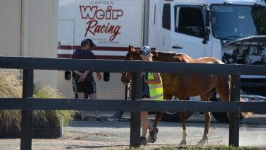 Darren Weir's stables at Ballarat on Wednesday.