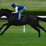 McDonald looks to He's Eminent for a group 1 thank you to mentors